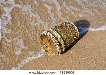 Goose barnacles attached to plastic bucket on a beach beside the sea