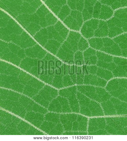 Low Scale Magnification of Green Leaf