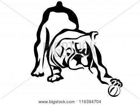 Bulldog Playing