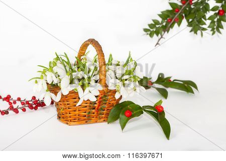 Bouquet of Snowdrops in punnet with red berries