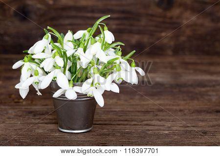 Bouquet of Snowdrops in tin bucket