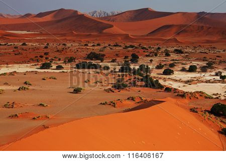 Dead Valley in Namib desert