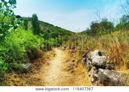 Dirt Path In Sardinian Countryside