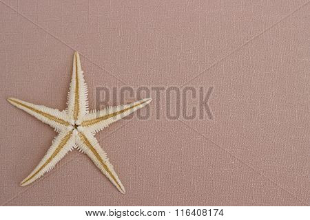 Summer Background: Starfish