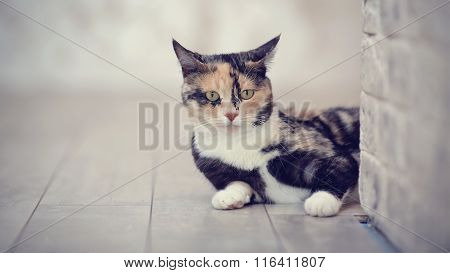 Portrait Of A Multi-colored Cat Near A Brick Light Wall