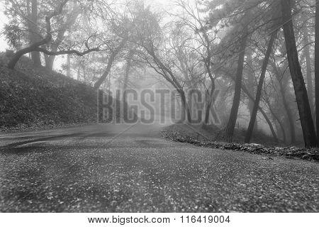 a foggy road