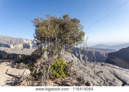 The Grand Canyon In Oman