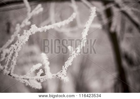 Beautiful views of  winter forest in the snow at sunset frosty days. Trees covered in frost and snow