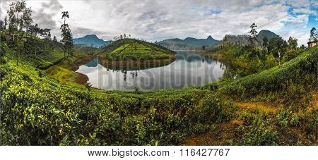 Panorama of the tea plantations near the lake. Sri Lanka