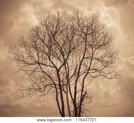 Tree Is Not Leaves And Branch Of Dead Tree With Dark Cloud Sky  In Dusk Period
