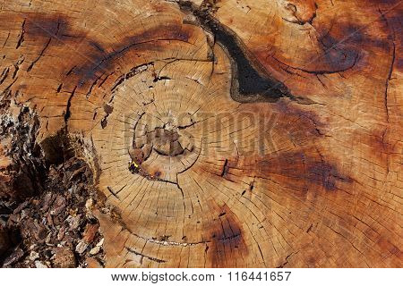 Texture Of Huge Tree Stump