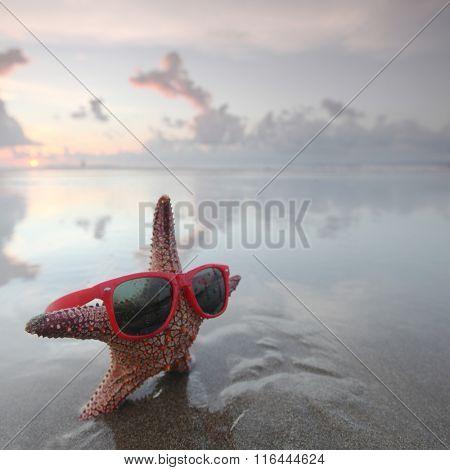 Starfish in sunglasses on summer beach at sunrise