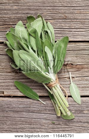 Bunch of garden sage herb on wooden table. Top view
