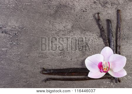 Blooming Orchid And Fragrant Vanilla Sticks, Copy Space For Text
