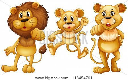 Lion family with one little cub illustration