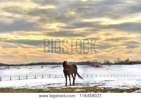 Horse in snow On A Maryland Farm