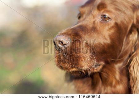 Beautiful Dog Nose