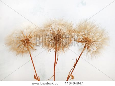 Fluffy Dried Plants