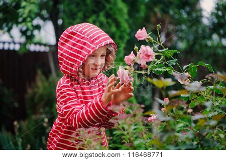 child girl in raincoat playing with wet roses in rainy summer garden. Nature care concept. Seasonal