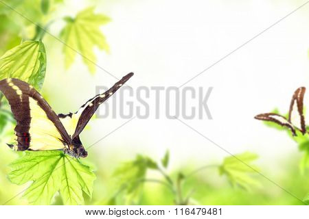 Spring or summer season abstract nature background with butterflies