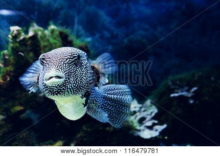 Underwater world - exotic fish in an aquarium