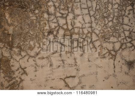 Venetian Plaster Old Light Beige Wall