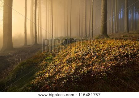 warm light in the autumn forest