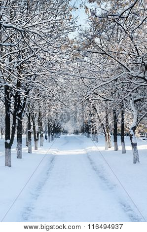 Snow-covered lime avenue stretches into the distance
