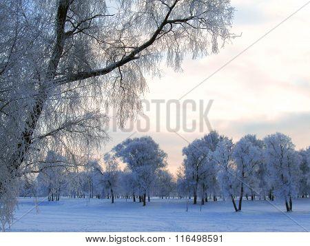 Winter landscape in hoarfrost
