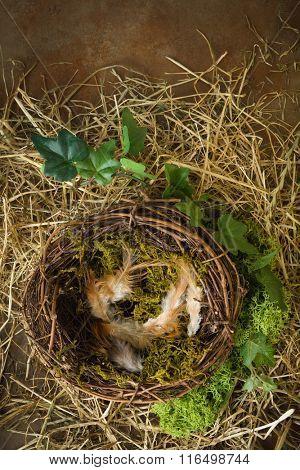 Empty bird's nest with moss and hay
