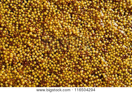 Background Of Seeds Of Mustard