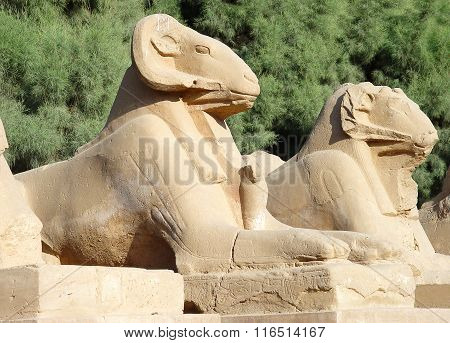 Avenue Of Sphinxes With Ram's Head In Luxor