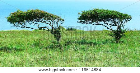 Trees bent by wind