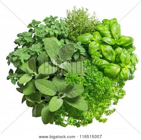 Food Ingredients. Fresh Herbs Isolated On White Background