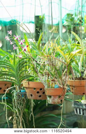 Orchid Flower Pots On A Plant Nursery