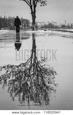 Puddle Reflection Of Tree, Walking Person, Black And White Photo