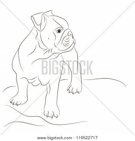 Dog English bulldog painted black lines