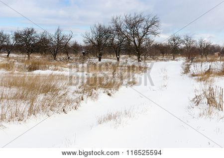 Winter landscape in Ukrainian country