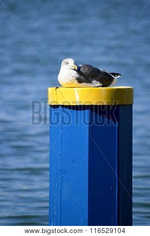 Seagull resting on a mooring post in Vilamoura marina