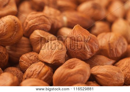 Close Up Hazelnut