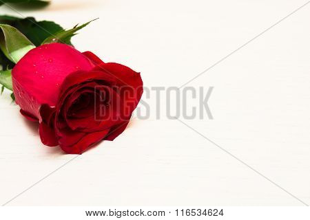 Red Rose On A Light Wooden Background. Women' S Day, Valentines Day, Mothers Day