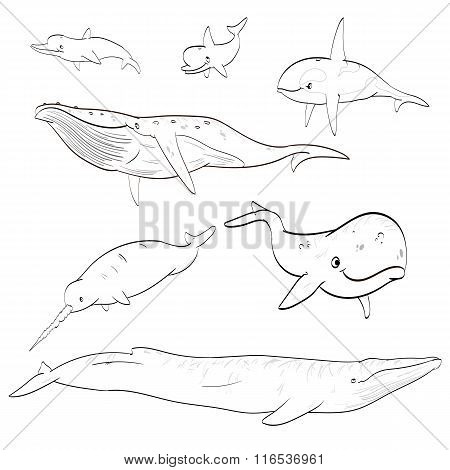 Line drawing cartoon whales collection
