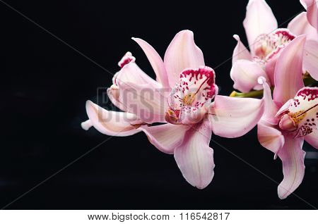 Set of orchids isolated