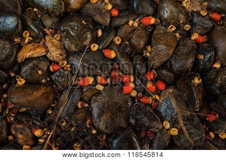 Abstract Background Of Rounded Pebble Stones With Bright Berries