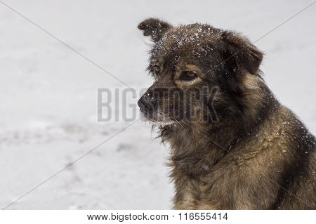 Outdoor portrait of cute mixed-breed dog winter season