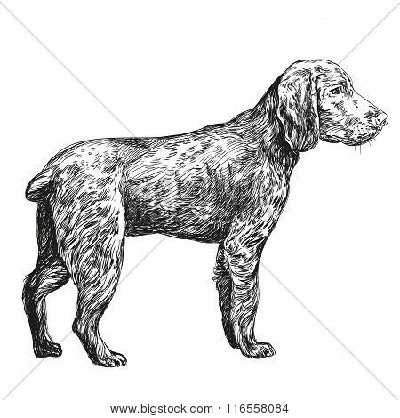 dog hunting hand drawn vector llustration realistic sketch