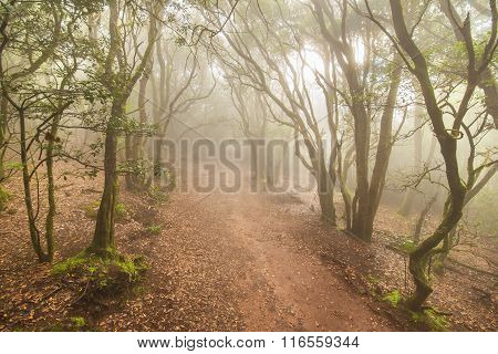 Misty forest in Anaga mountains Tenerife Canary island Spain.