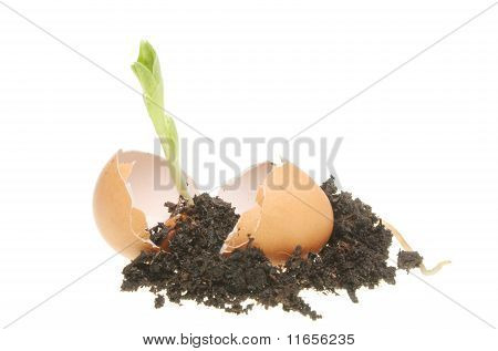Seedling And Soil In An Egg