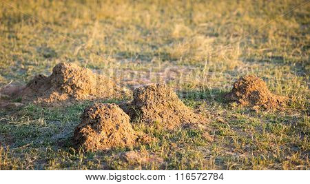 Ant Hill Mounds