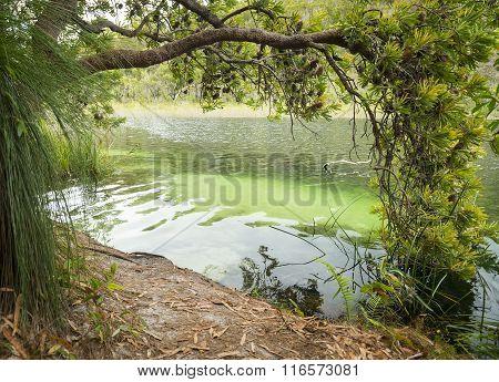 Blue Lake Stradbroke Island